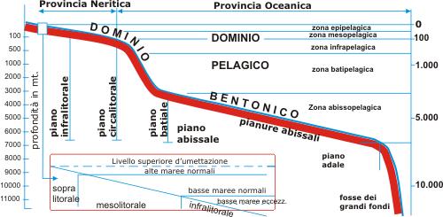 Suddivisioni batimetriche dominio bentonico e dominio for Piani artigiani per lotti stretti
